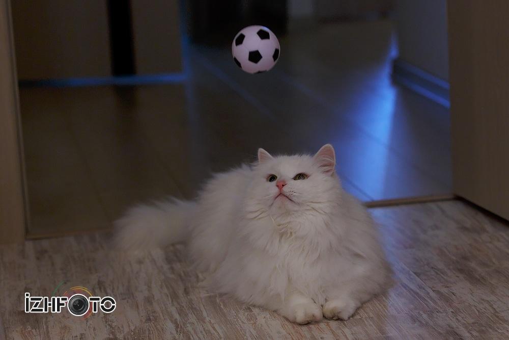 Футбол любят  все