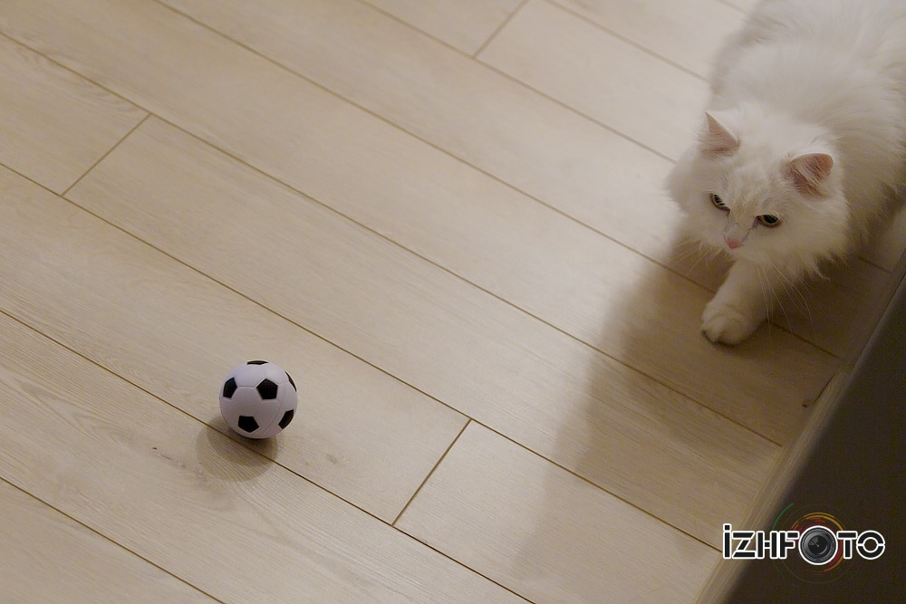 Кот и мяч Фото