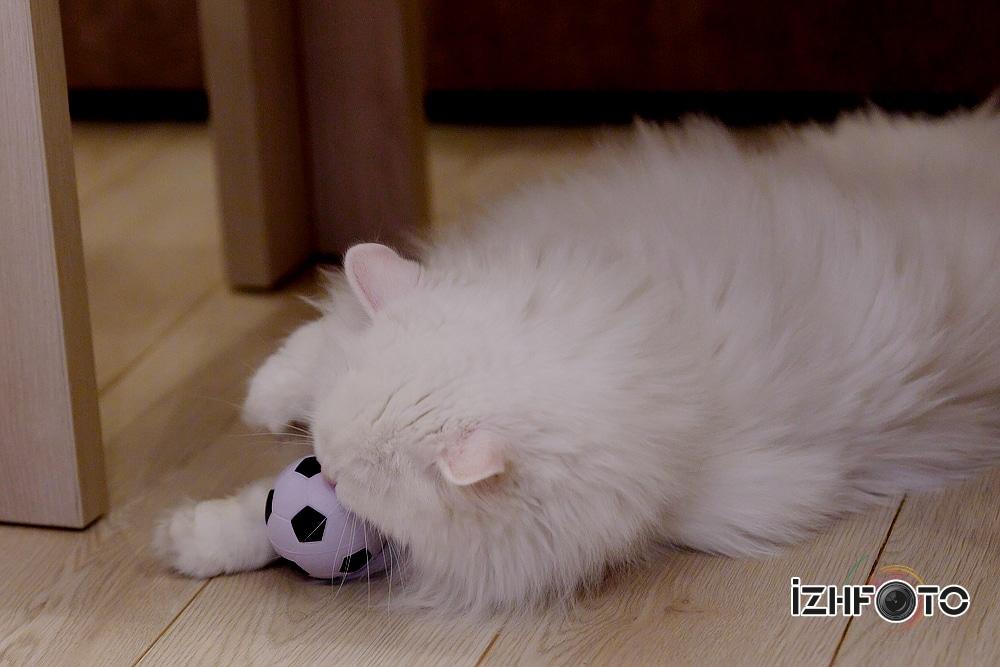 Кот играет мячиком Фото