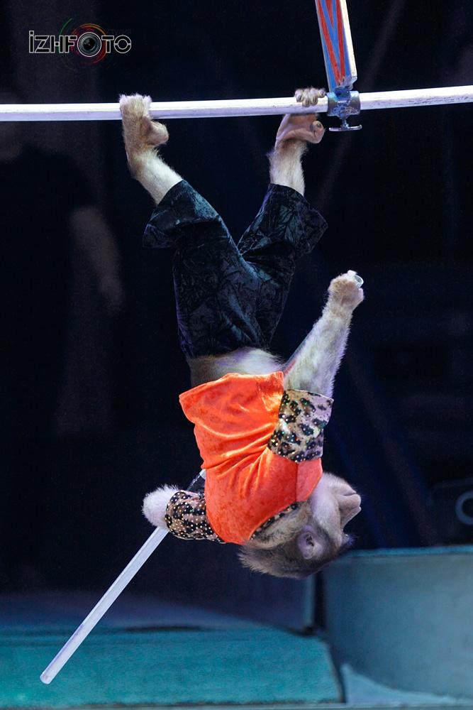 Шоу фонтанов цирк Ижевск