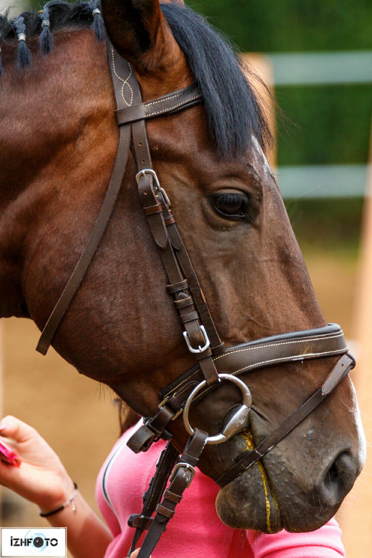 Фотографии красивых лошадей