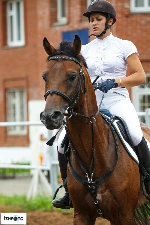 Развитие конного спорта в Удмуртии