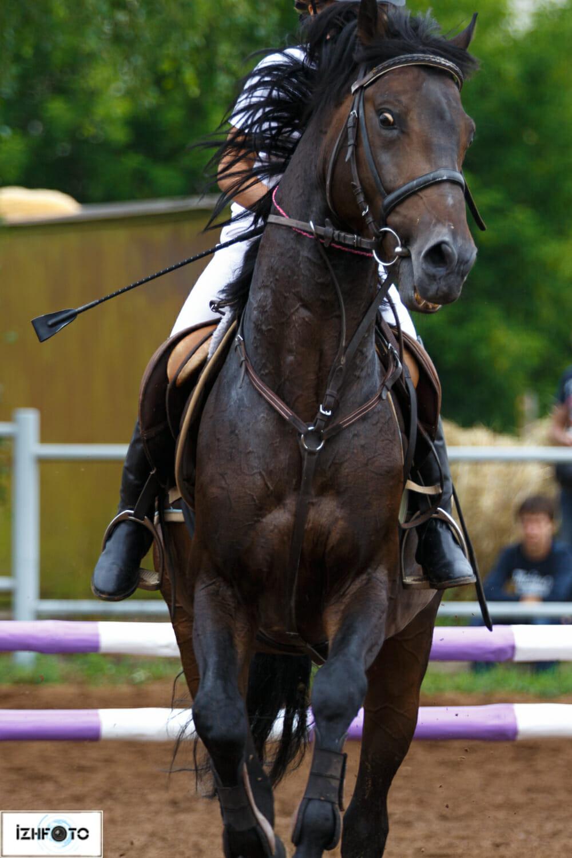 Занятия конным спортом в Ижевске