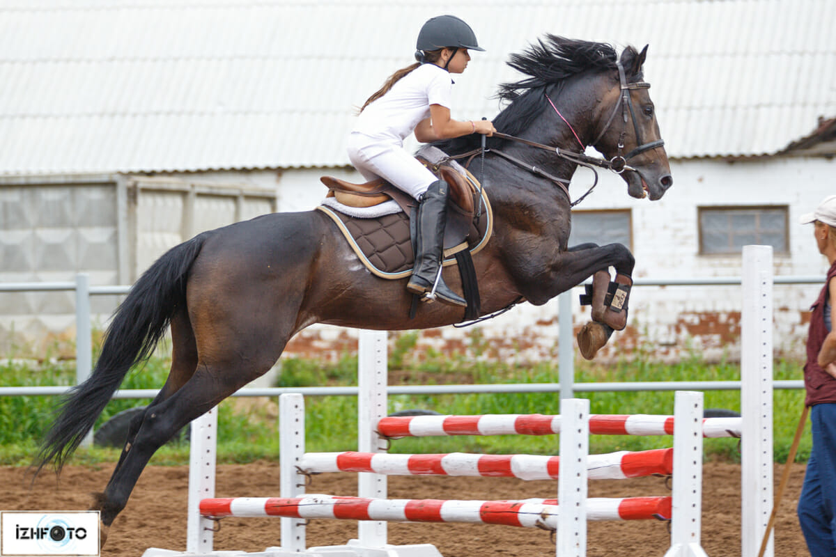 Конный спорт Фото