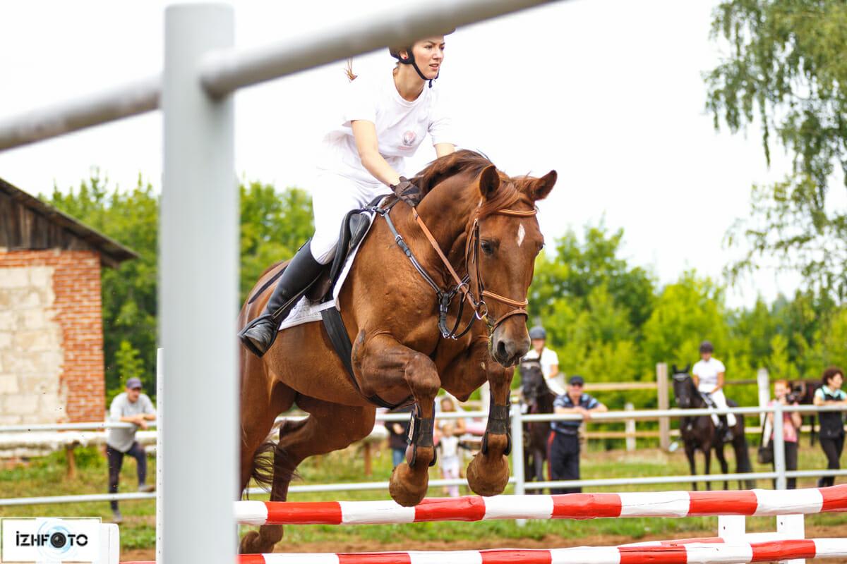 Фото портреты лошадей