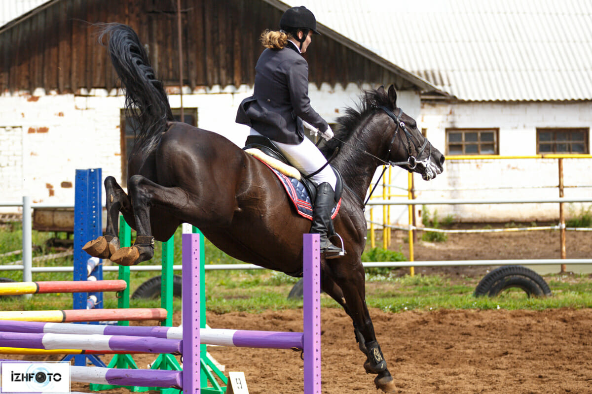 Конный спорт соревнования