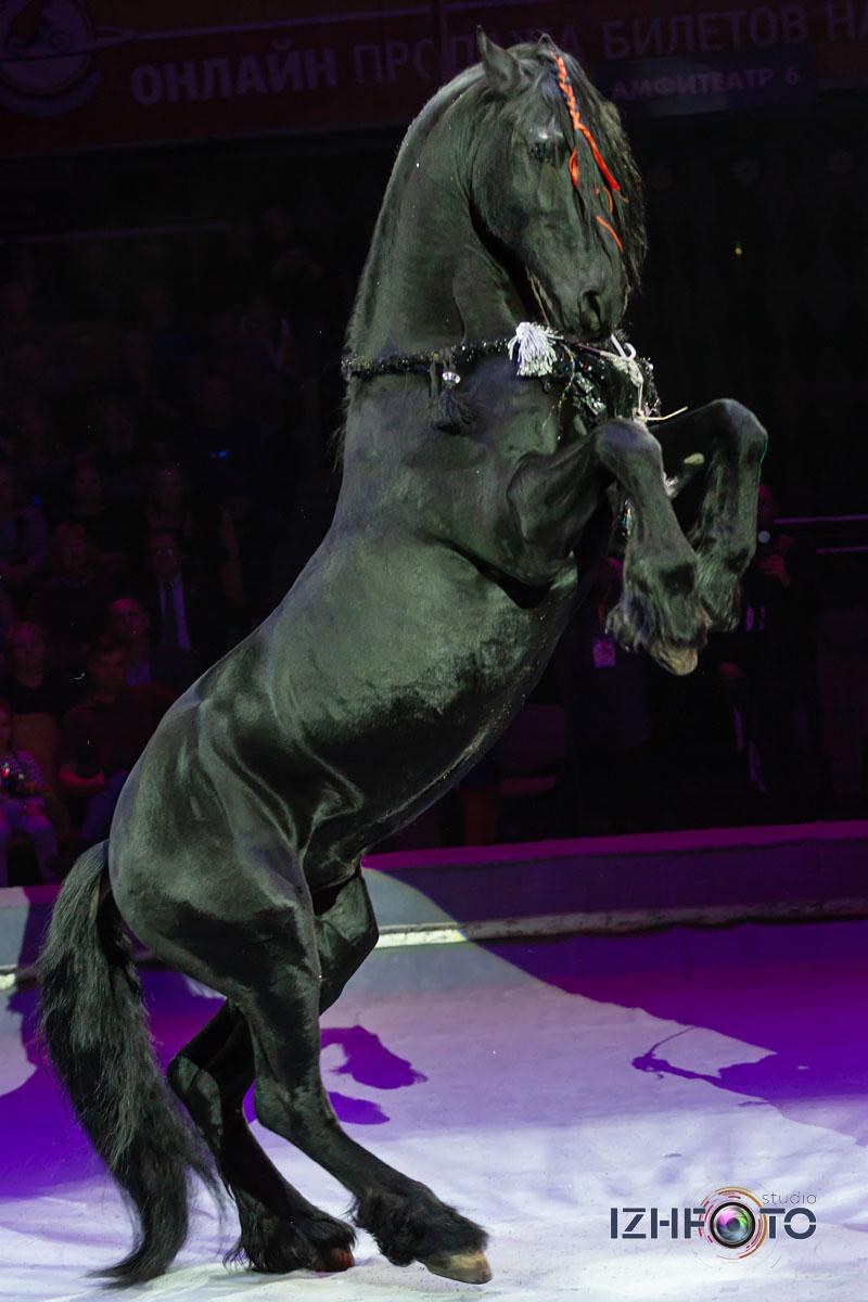 Фестиваль цирк Фото 2020