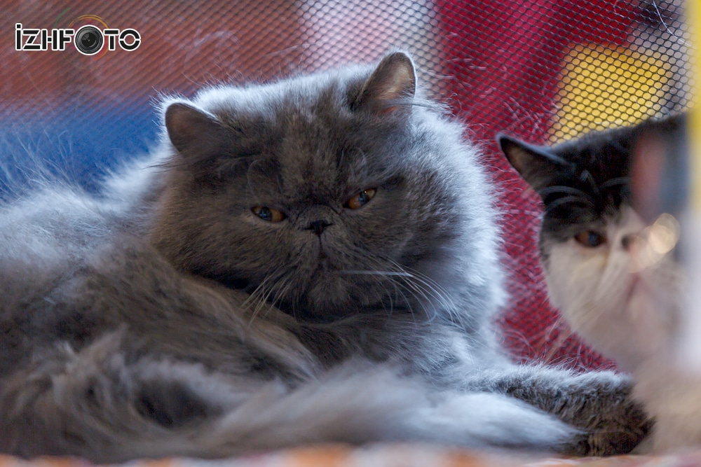 Кошки даром Ижевск