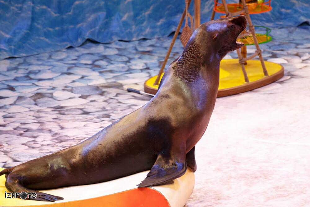 Театр морских животных Фото