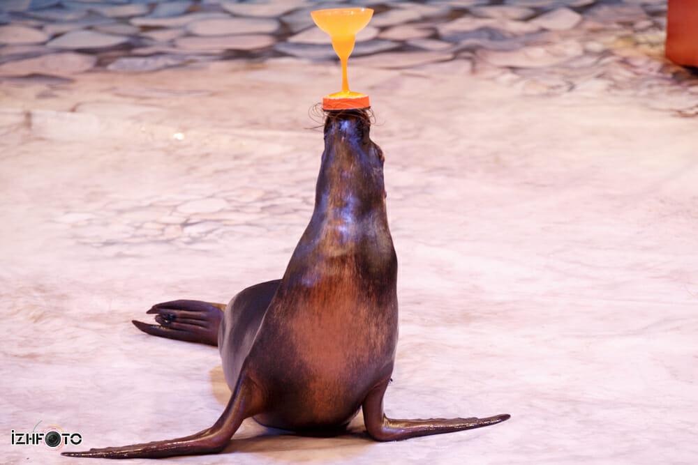 Театр морских животных