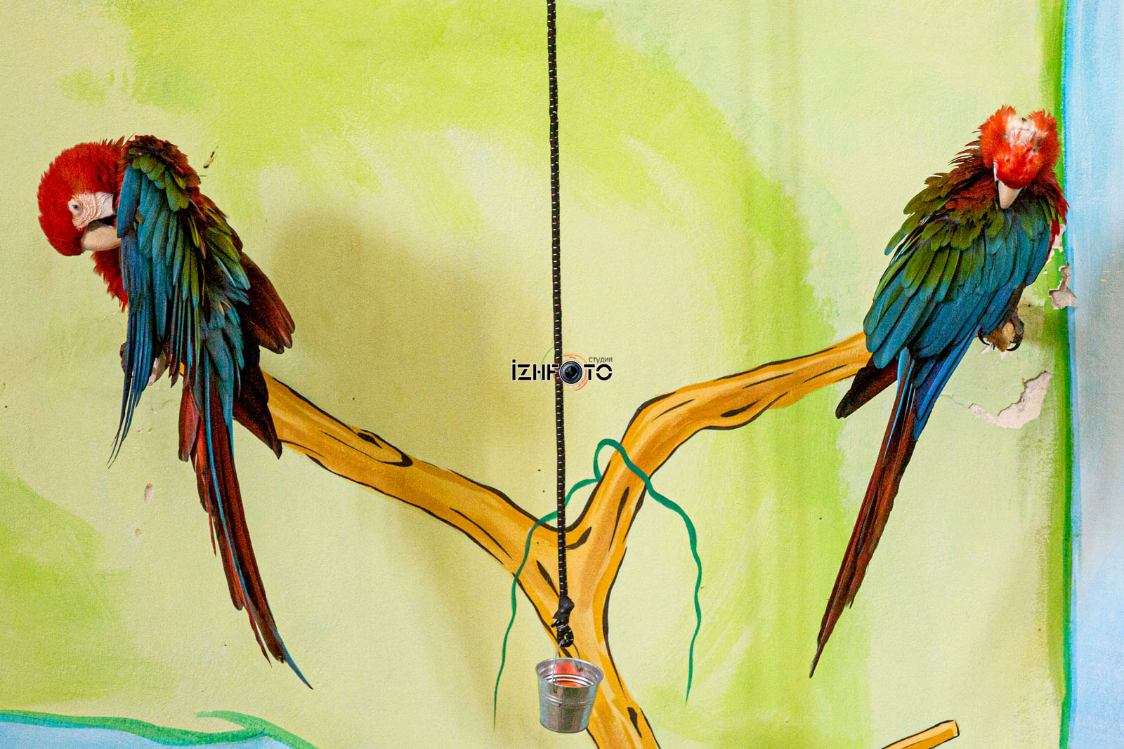 Шоу попугаев в зоопарке Пафоса на Кипре