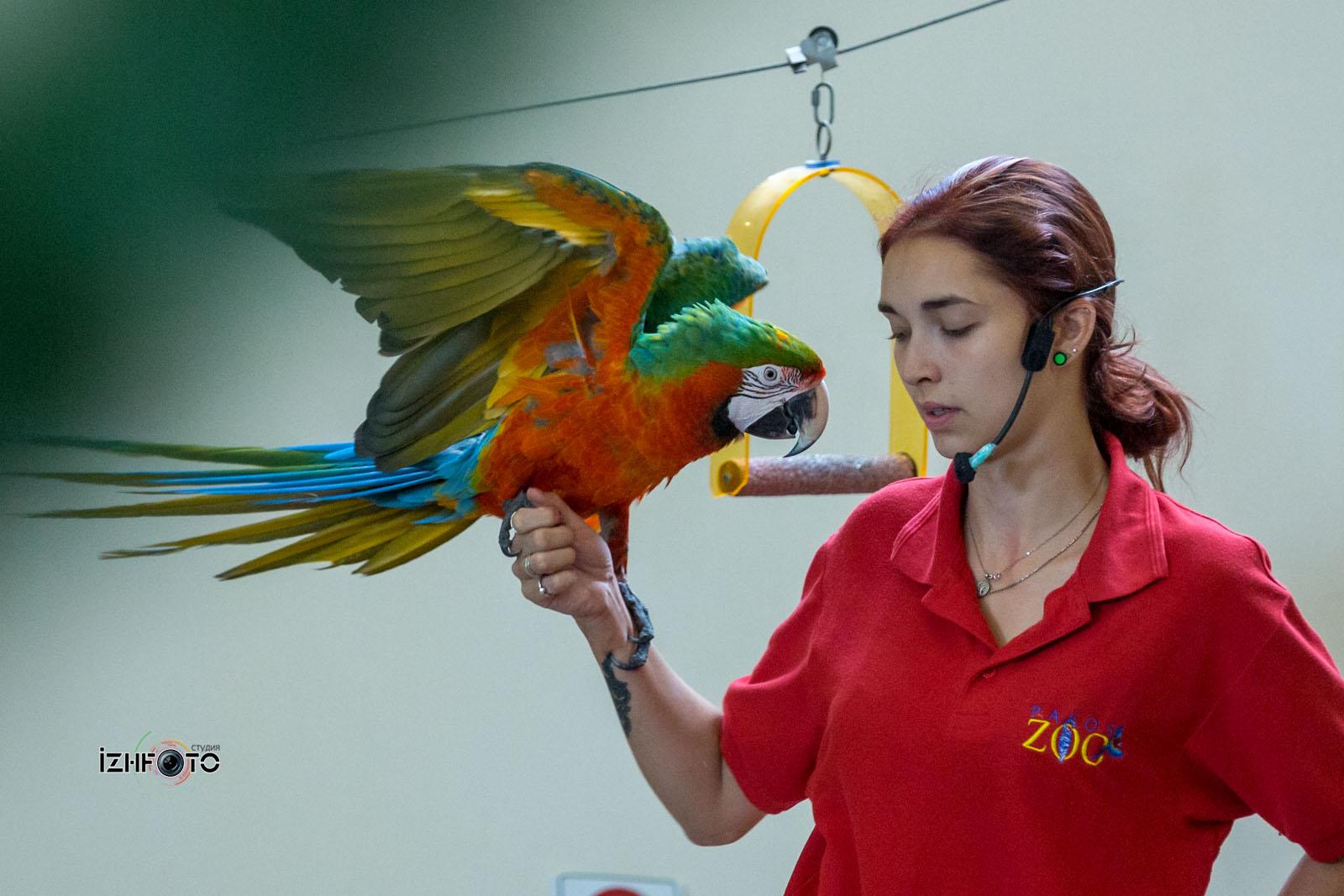 Фото с шоу попугаев в зоопарке