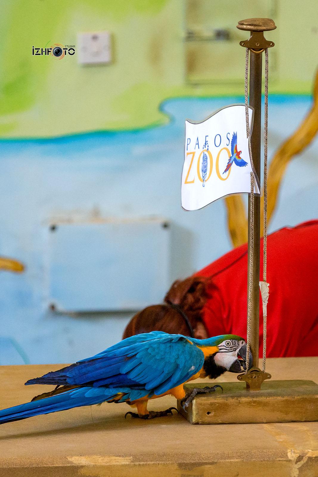 Фото из зоопарка Пафоса Кипр