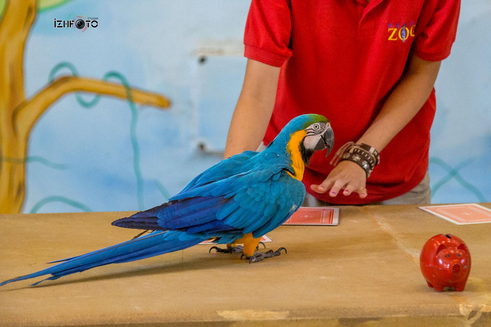Дрессированные попугаи в зоопарке фото