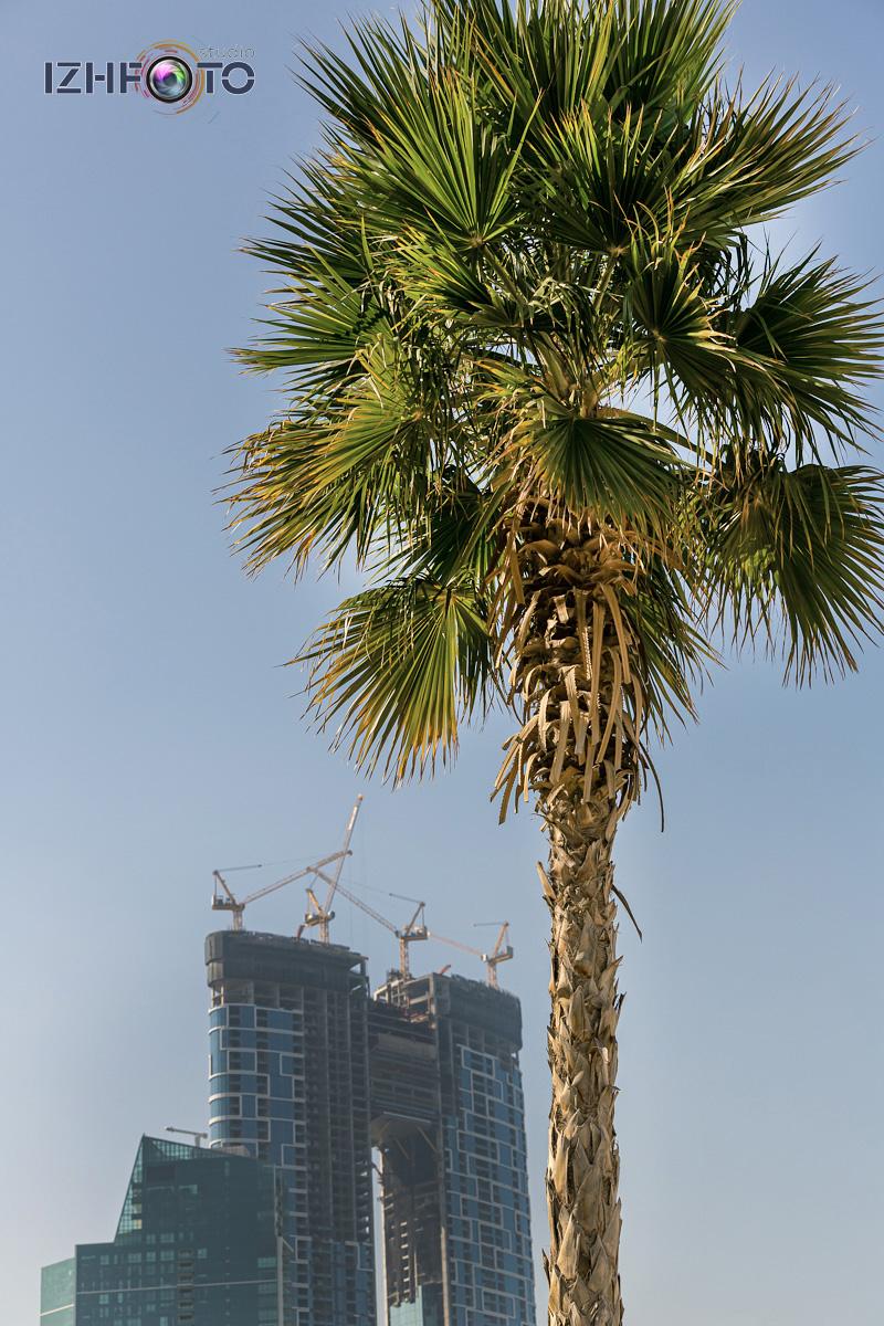 Небоскребы Дубай ОАЭ Фото