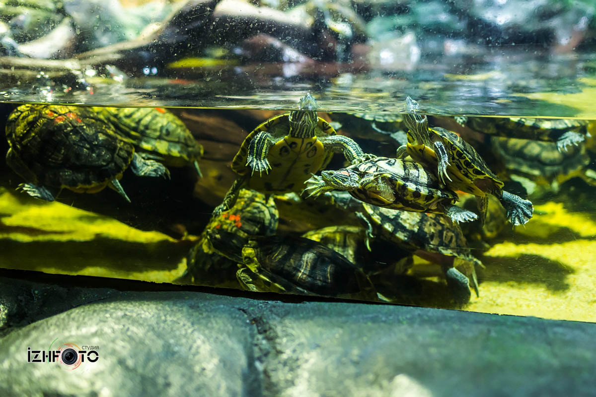 Фото из Стамбульского аквариума