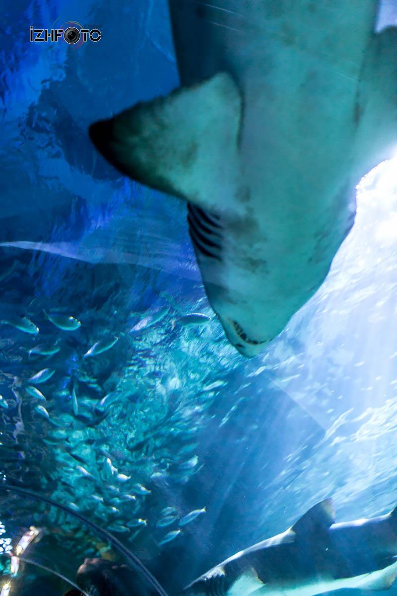 SeaLife Istanbul