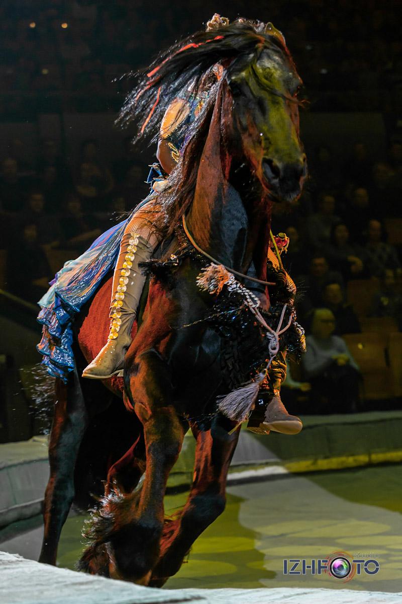 Фото дрессированных лошадей в Цирке