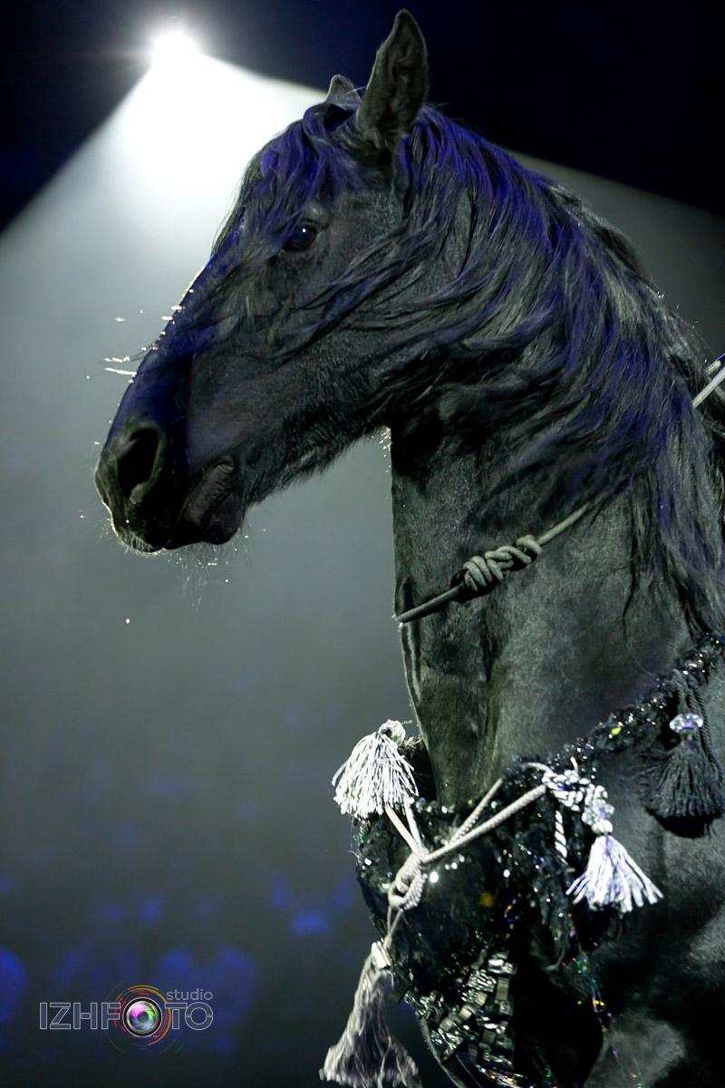 Дрессированные лошади на цирковом представлении