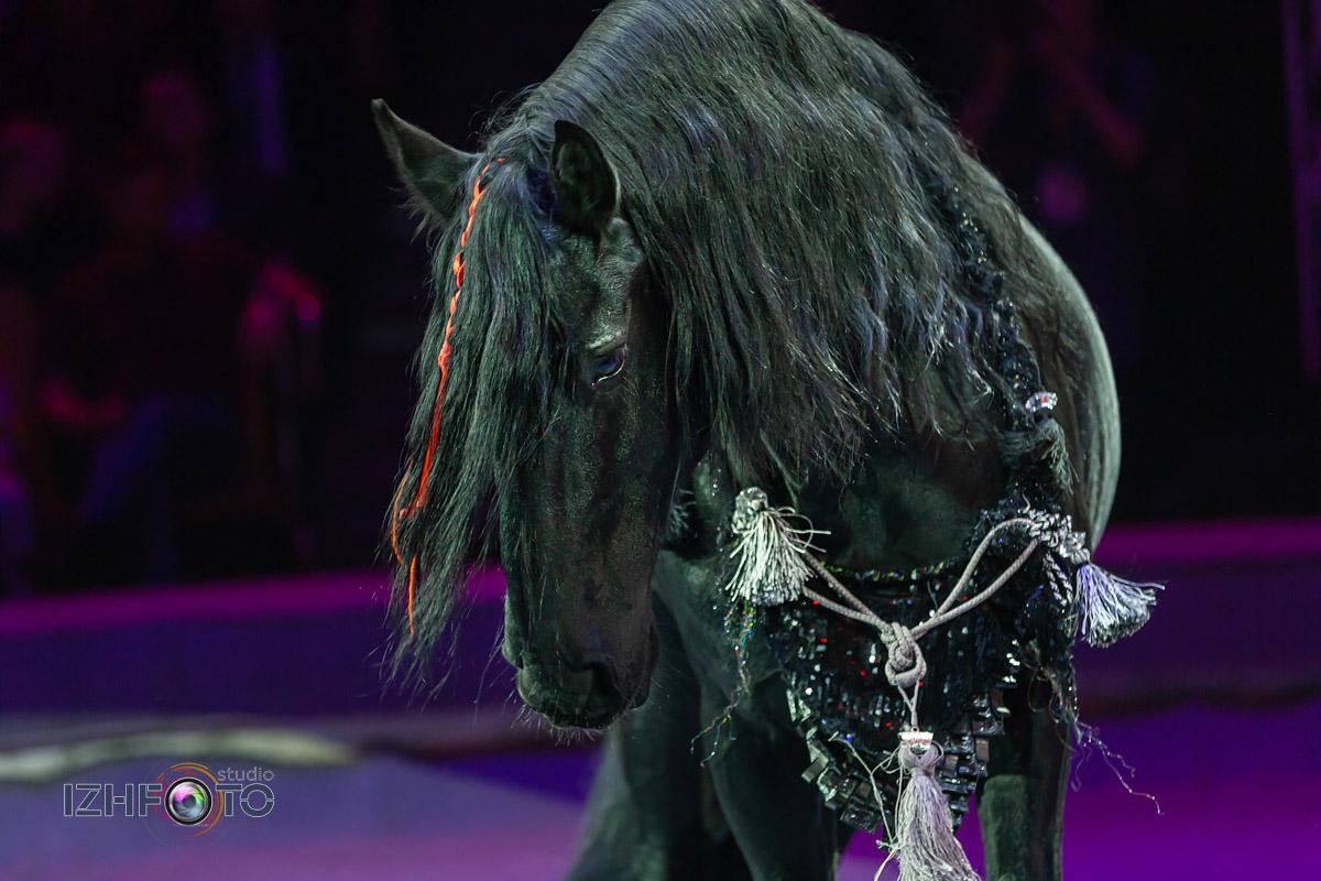 Фото из Ижевского цирка