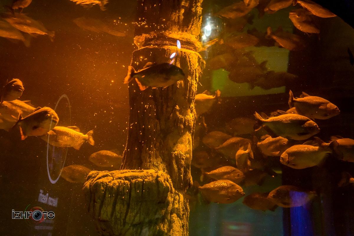 Большой аквариум в Стамбуле
