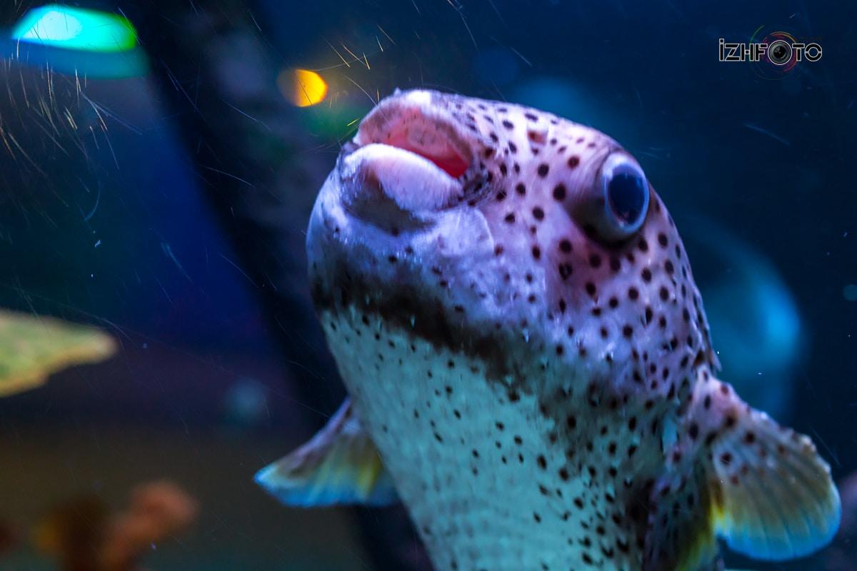 SeaLife Istanbul Photo