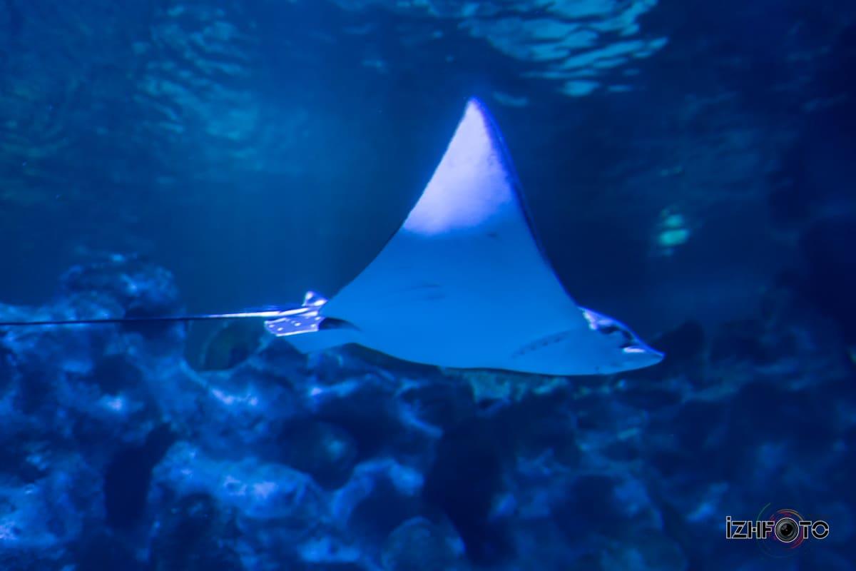 SeaLife Forum Istanbul photo