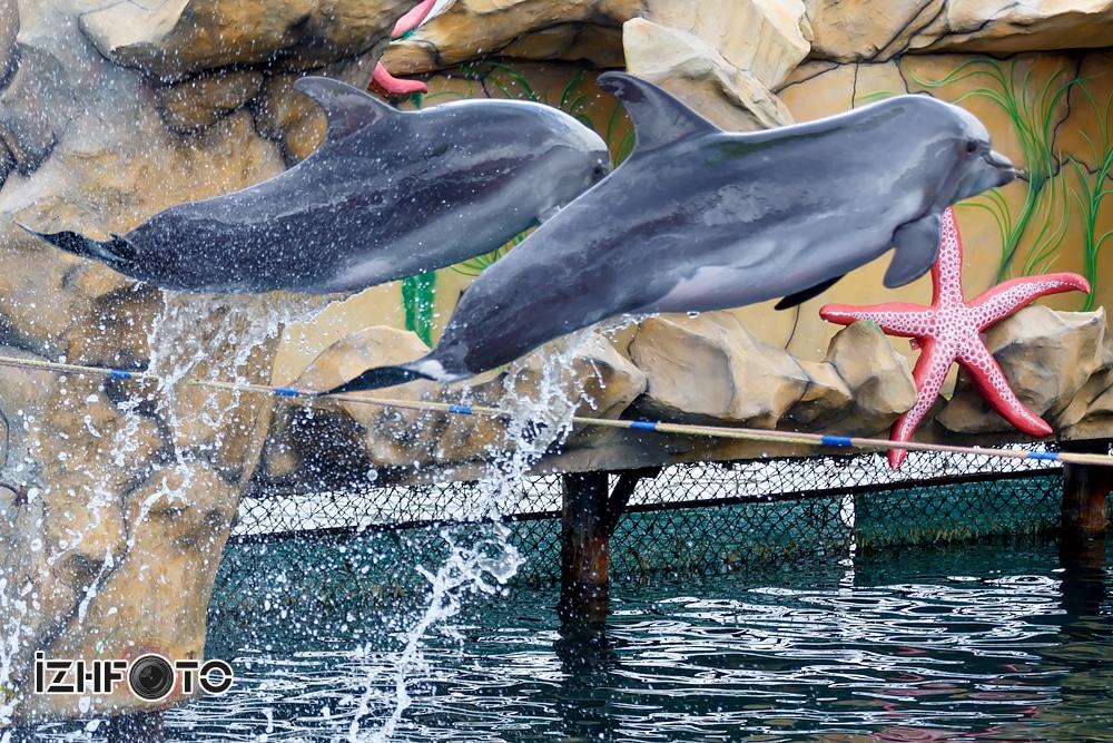 Дельфинарий в Утрише официальный сайт