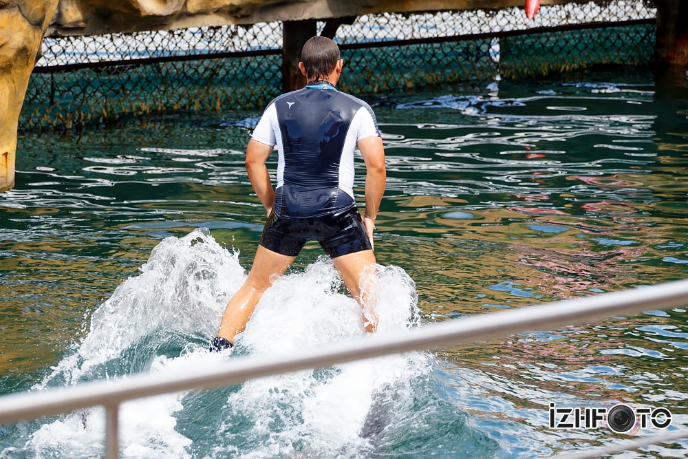 Дельфинарий Утриш
