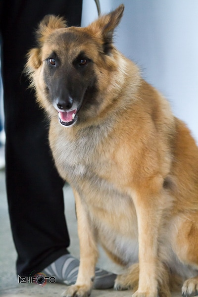Выставка собак в Ижевске