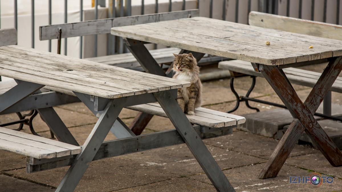 Коты в Ялте ждут туристов