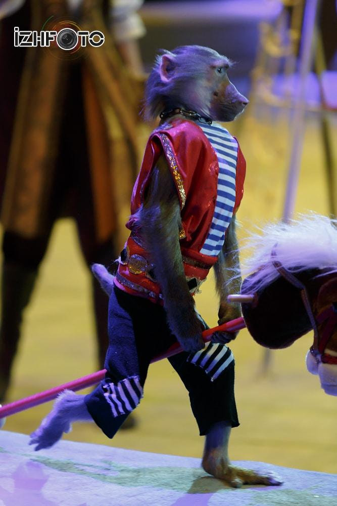 Обезьянки в цирке Фото