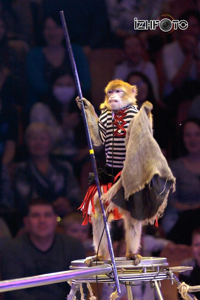 Забавные обезьянки Фото