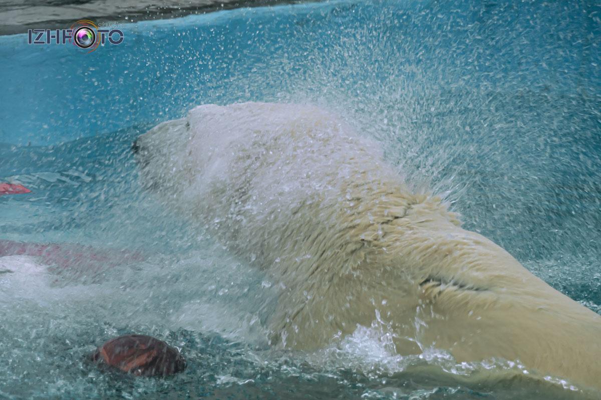 Белый медведь в зоопарке Фото