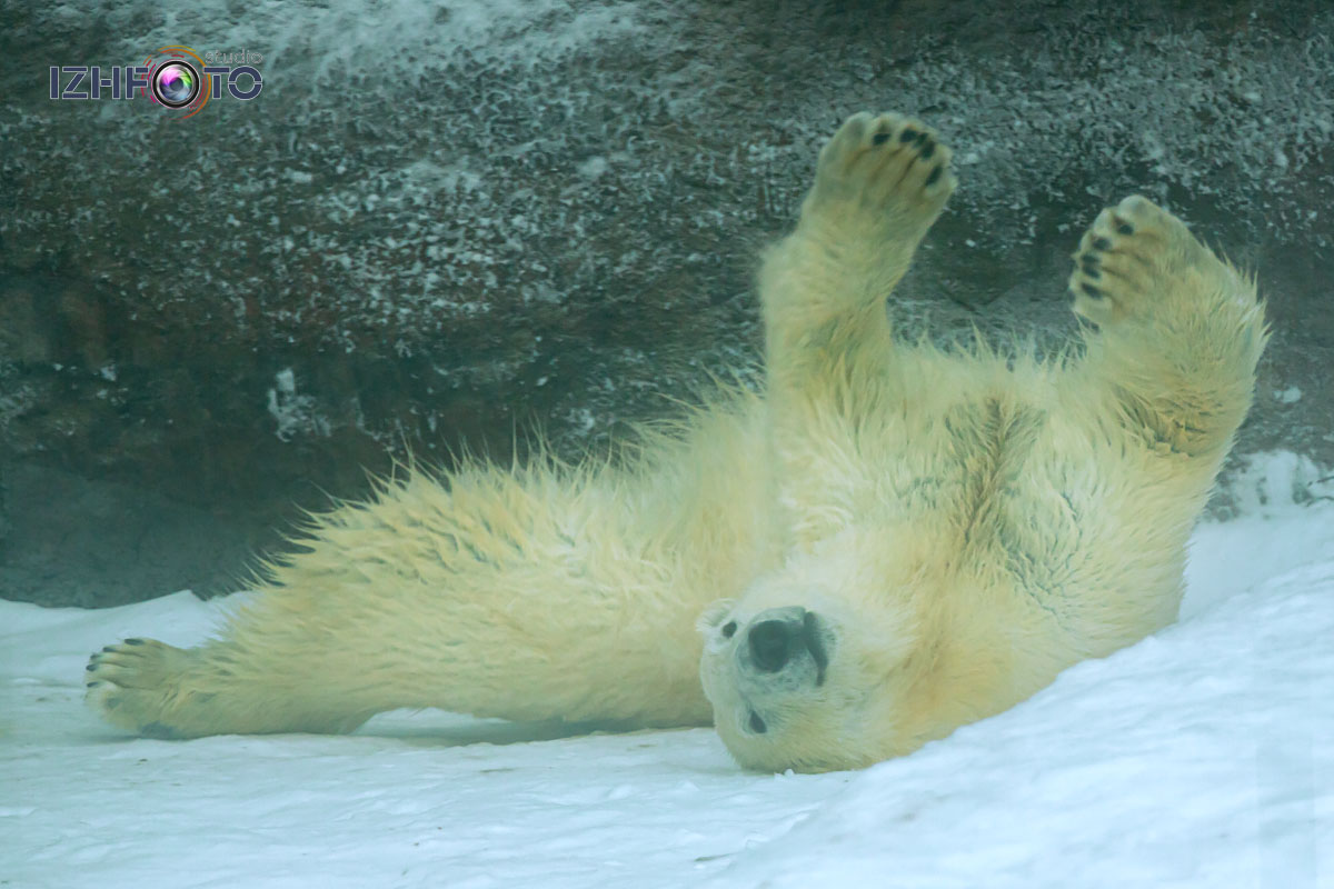 Зимний зоопарк Фото