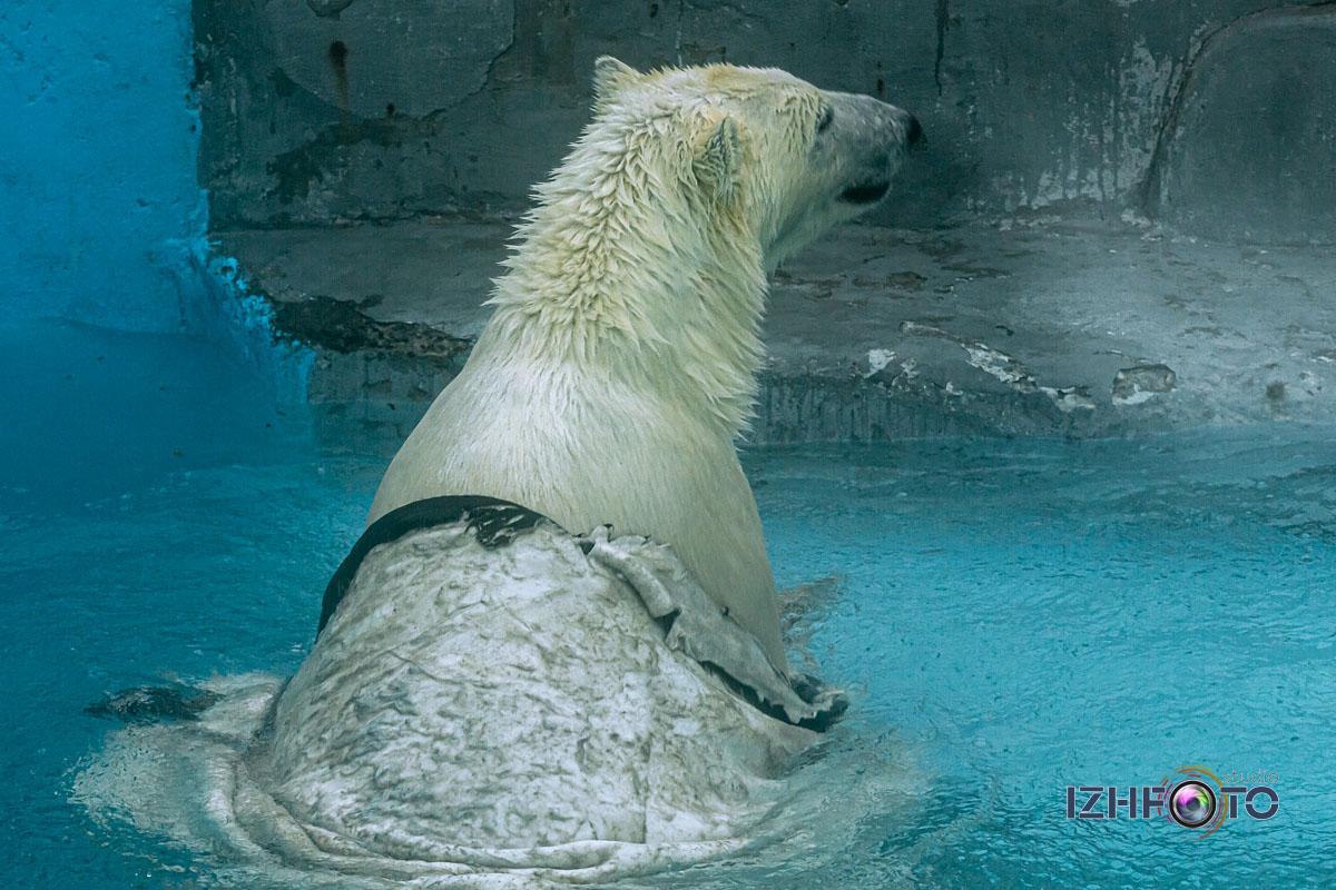 Фото обитателей зоопарка зимой