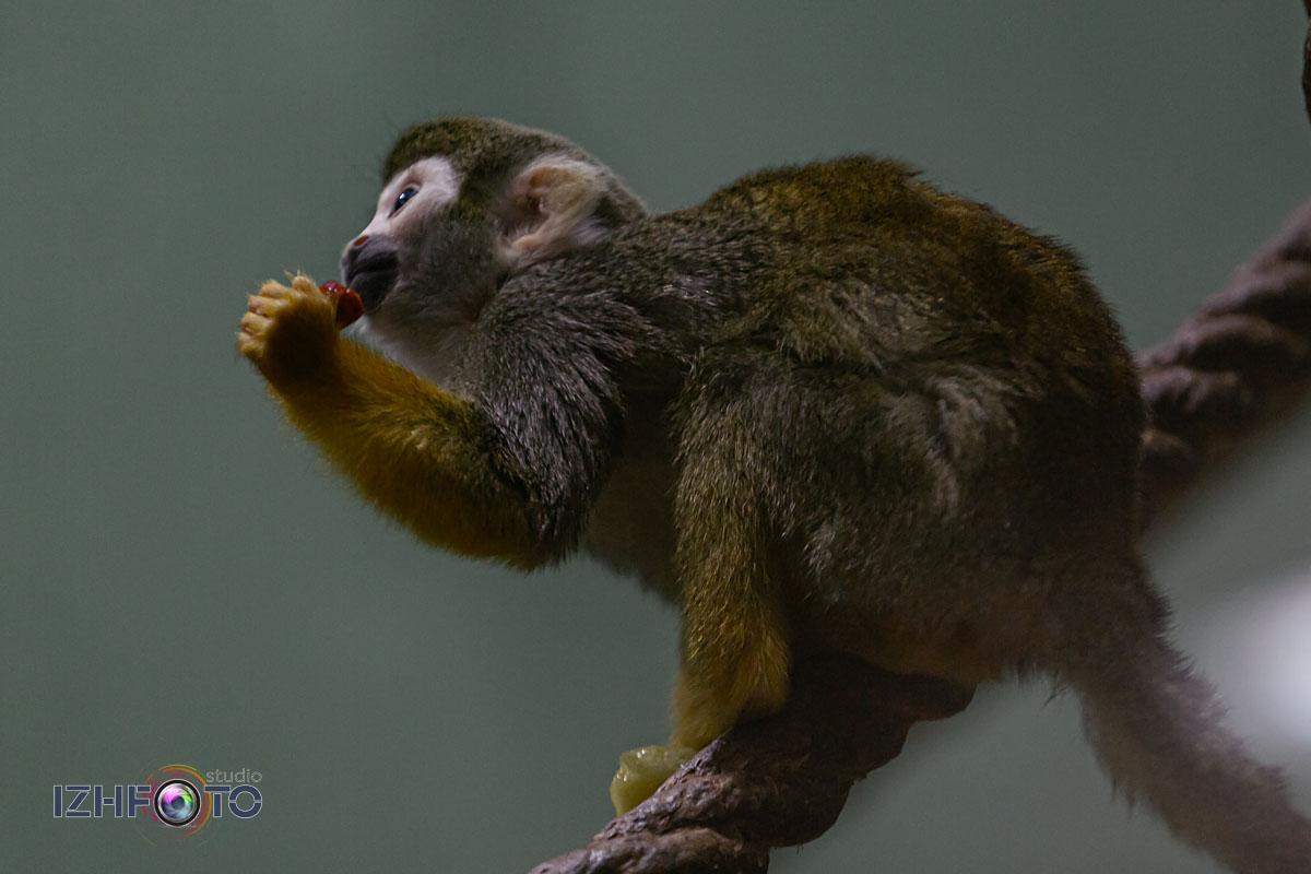 Страна обезьян Фото