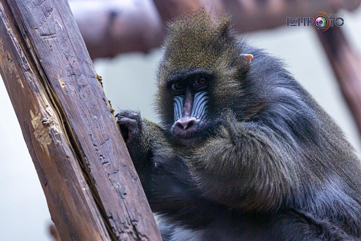 Фото Страна Обезьян в зоопарке Ижевска
