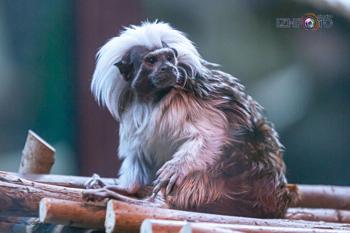 Как живут обитатели зоопарка Ижевска зимой Фото
