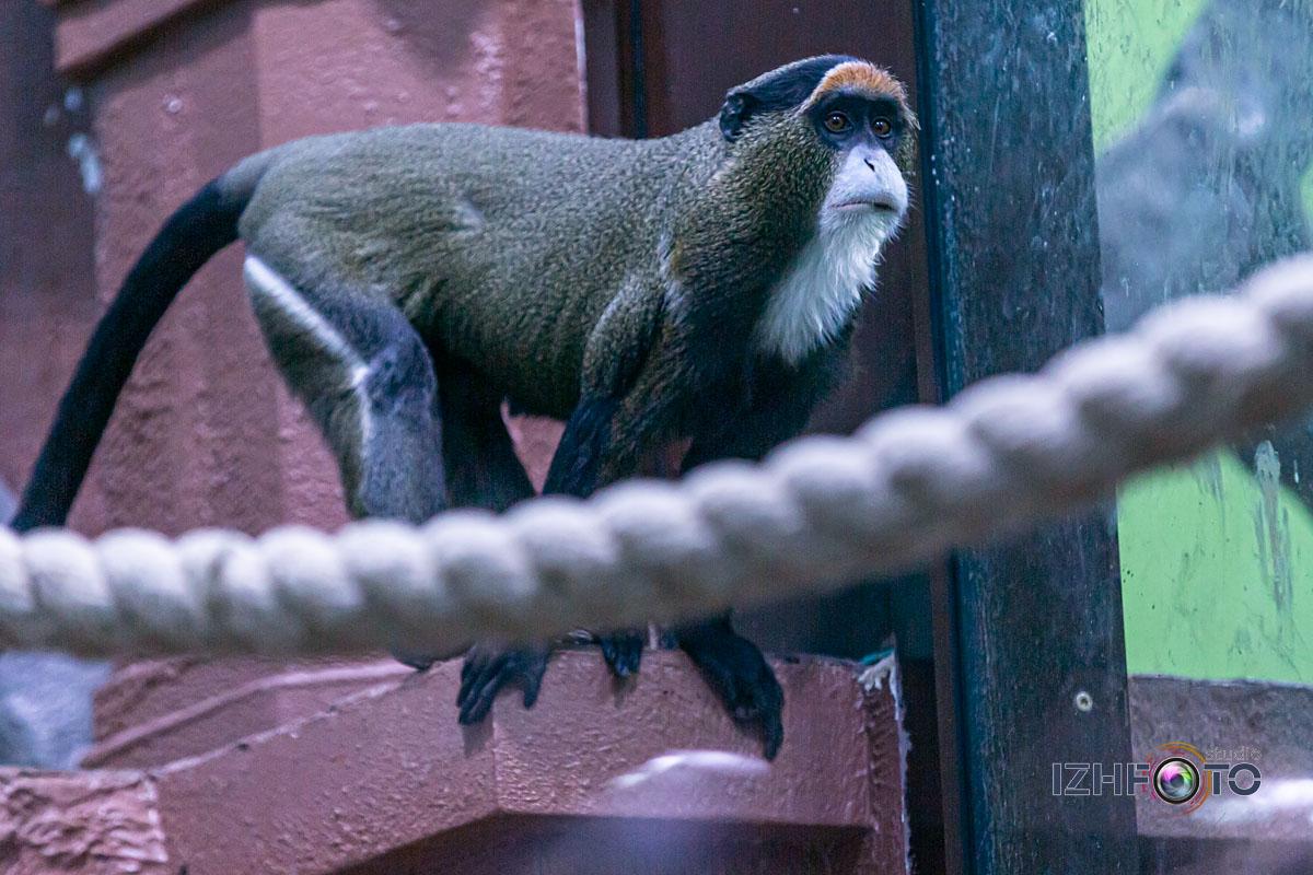 Обезьяны в зоопарке Ижевска