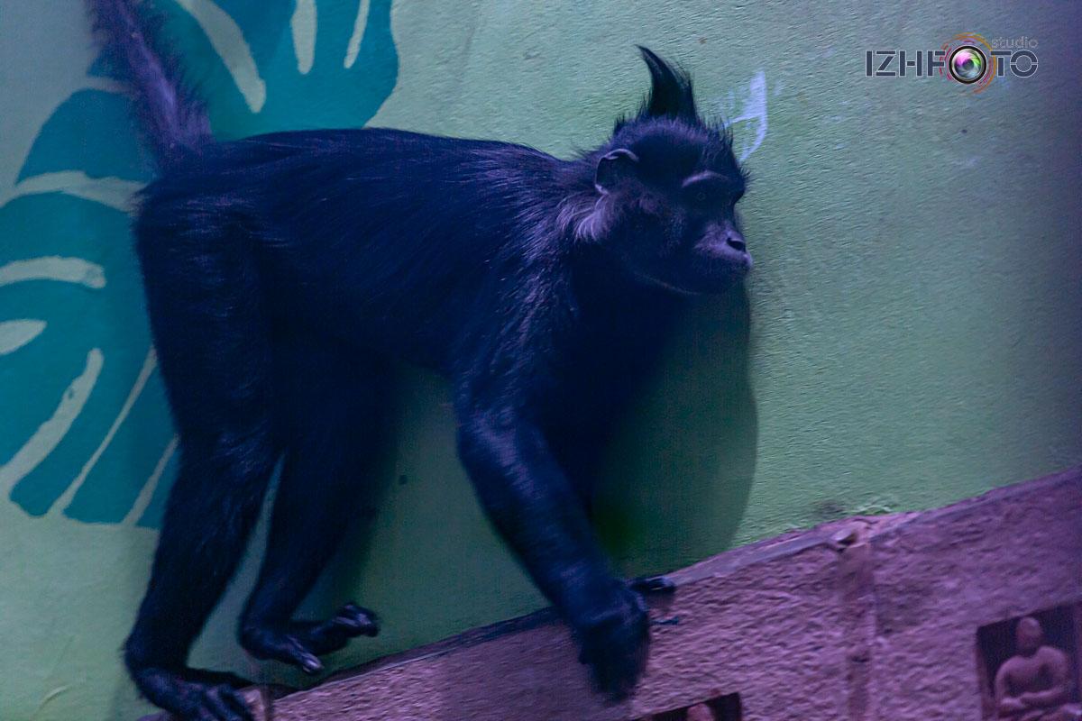 Страна обезьян зоопарк Ижевска