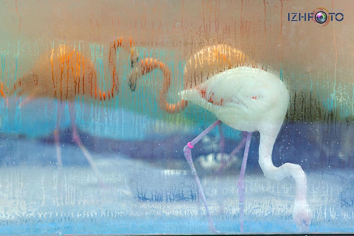 Фото из зоопарка зимой