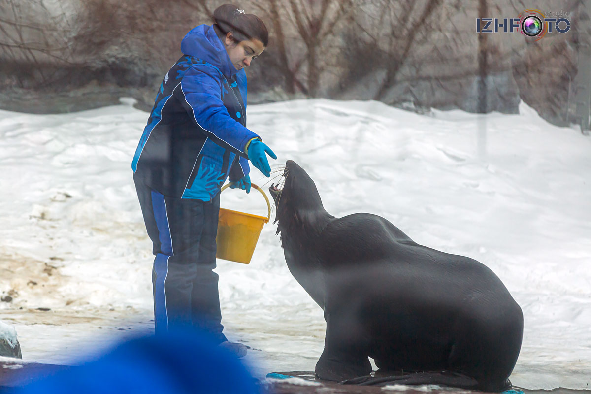 Семейный отдых в Ижевске зимой