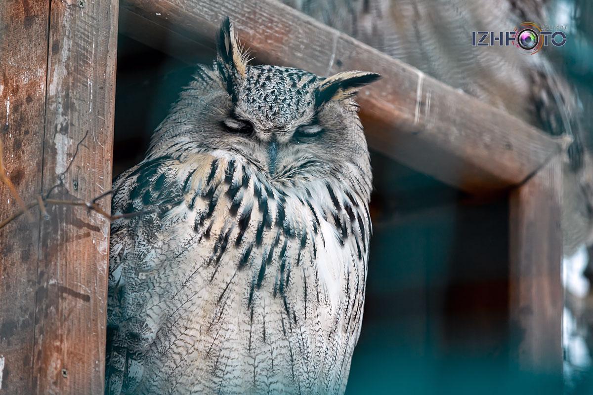 Зоопарк Ижевска Фото