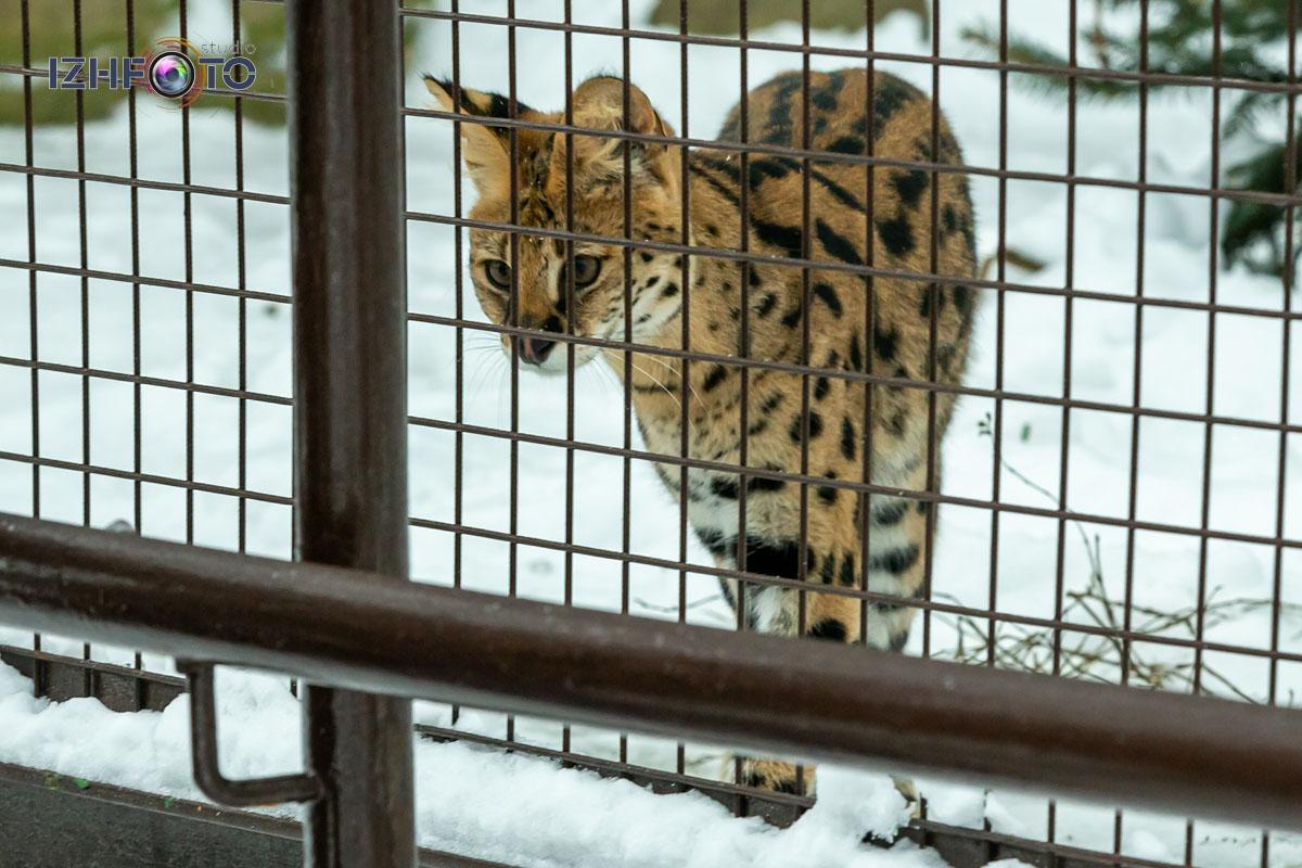 Прогулки по зоопарку Ижевска