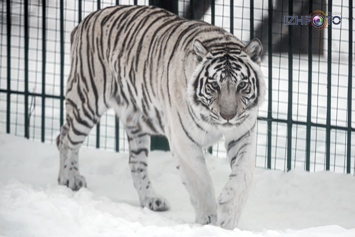 Фото животных в зоопарке Ижевска