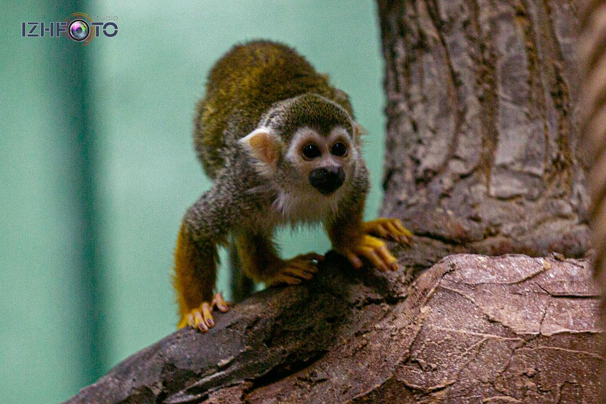 Фото обезьян в зоопарке