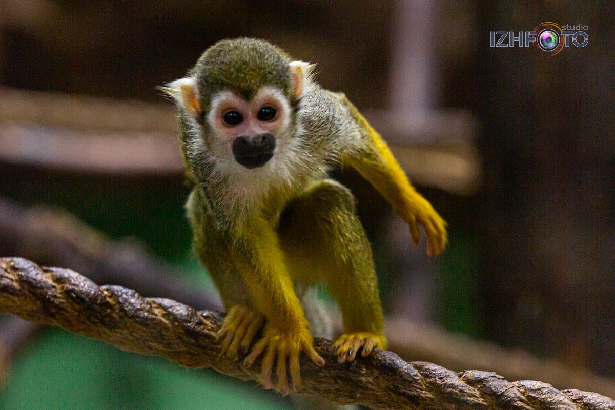 Фото питомцев Страны обезьян