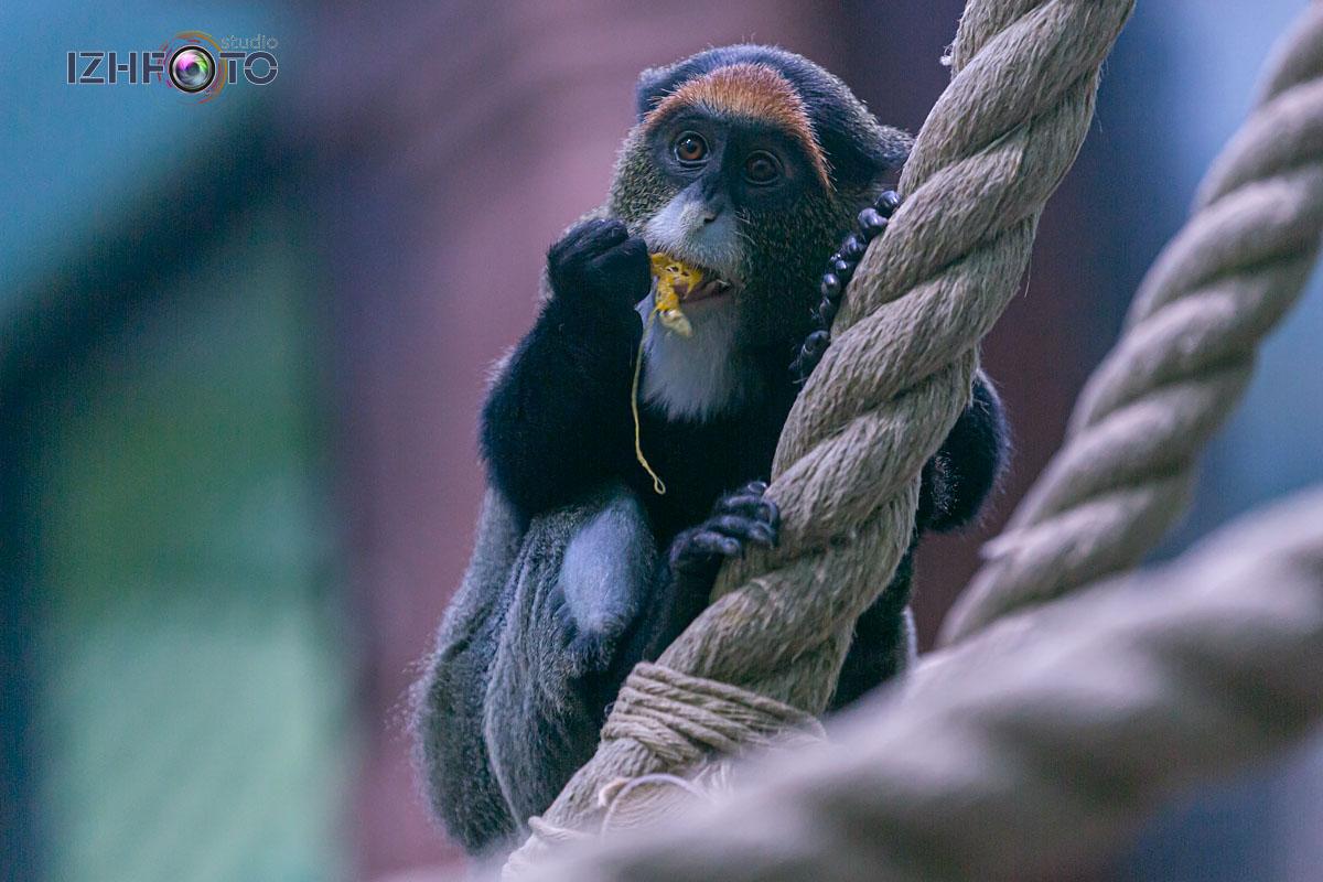 Фото с прогулок по зоопарку Ижевска