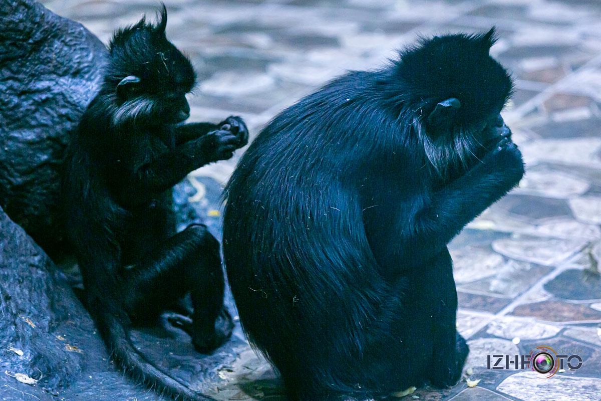 Официальный сайт зоопарка в Ижевске http://www.udm-zoo.ru/